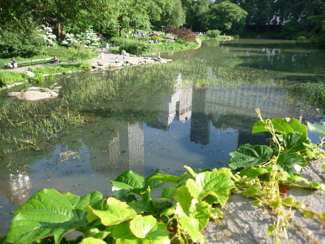 Reflections on a pond in Central Park